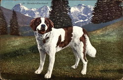 St. Bernard Dog Poses, With Snowy Mountains in Background
