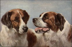 Two St. Bernard dogs