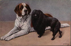 St. Bernard and Black Poodle