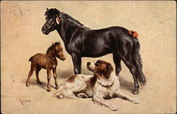 Black Horse, Brown Foal, Dog