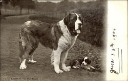 Saint Bernard with Puppy