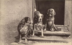 Three Dogs on Steps