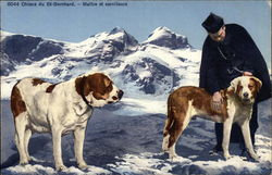 Man with Two Saint Bernards on Snowy Background