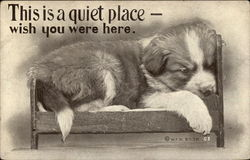 St. Bernard Puppy - This Is A Quiet Place - Wish You Were Here