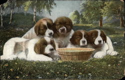 Five Saint Bernard Puppies With Water Bowl