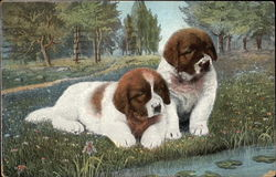 Two St. Bernard Puppies