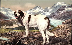 St. Bernard with Snowy Mountains