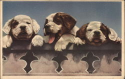 Three Brown and White Puppies
