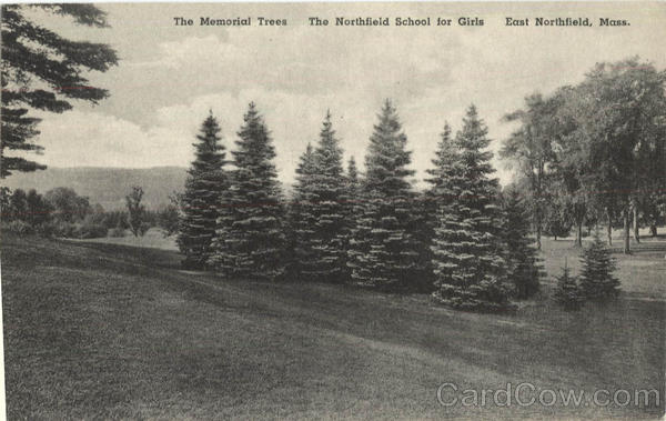 The Memorial Trees East Northfield Massachusetts