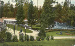 The Zoo In Point Deviance Park Postcard