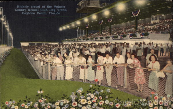 Nightly Crowd at the Volusia County Kennel Club Dog Track Daytona Beach Florida