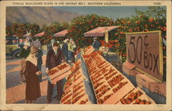 Typical Boulevard Scene in the Orange Belt, Southern California Postcard