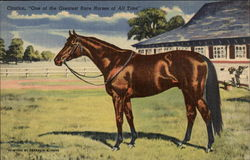 "Citation, ""One of the Greatest Race Horses of All Time"""