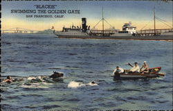 Blackie Swimming the Golden Gate