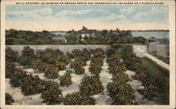 Solid Comfort, Glimpse of an Orange Grove and Homestead on the banks of a Florida river