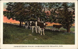 Greetings from Chebeague Island Postcard