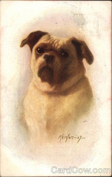 Brown and White Dog Henry Kenyon Dogs