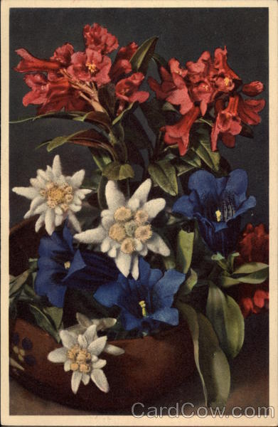 Red, White, and Blue flowers
