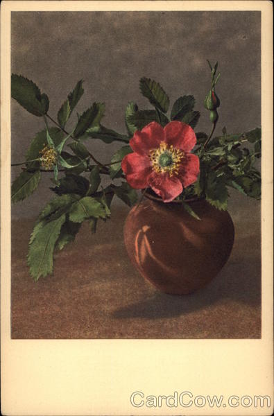 Alpine Rose in a Brown Vase Flowers