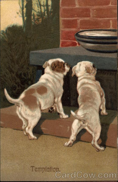 Two Dogs Looking at Bowl of White Liquid/Cream