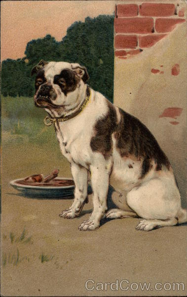 Brown and White Dog with Bowl Dogs