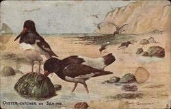 Oyster-Catcher or Sea-Pie