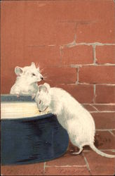 Two White Mice Drinking from Bowl of Milk/Cream