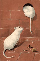 Two White Mice with Broken Nut