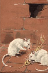Two White Mice Feast on Grain