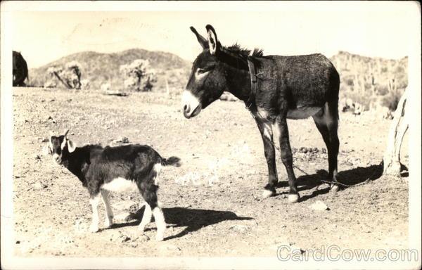 Donkey and Goat Donkeys