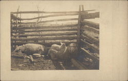 Three Sheep in a Pen