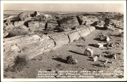 Petrified Coniferous Trees Uncovered by Erosion
