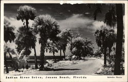 Indian River Drive Postcard