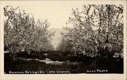 Manson Orchards