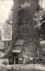 World Famous Tree House