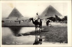Man on Camel with Sphinx and Pyramids in the Background Postcard