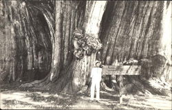 Man in Front of Huge Tree