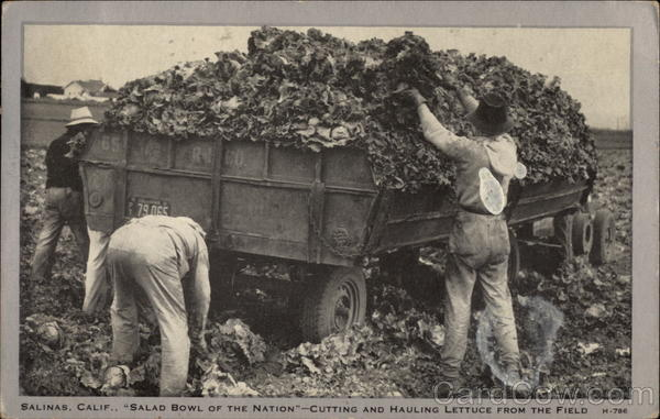 Salad Bowl of the Nation - Cutting & Hauling Lettuce from the Field Salinas California