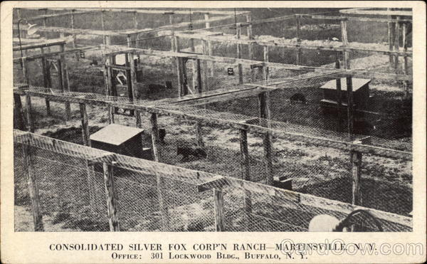 Consolidated Silver Fox Corporation Ranch Martinsville New York