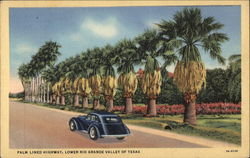 Palm Lined Highway, Lower Rio Grande Valley