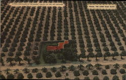 Citrus Orchard in the Magic Valley of the Rio Grande