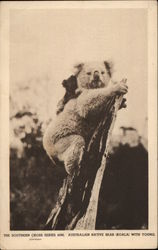 Australian Native Bear (Koala) with young