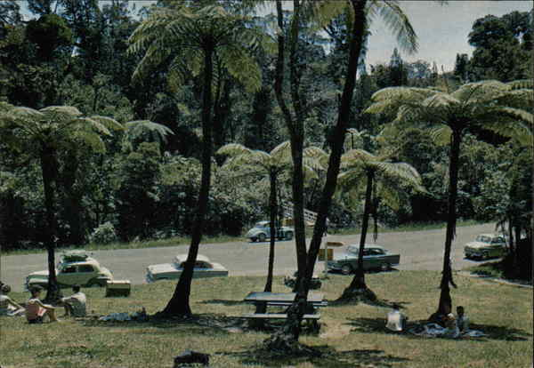 Picnic Area, Waipoua, Kauri Forest, Northland, N.Z New Zealand