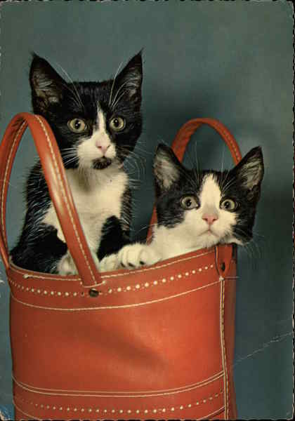 Two Kittens Peek Out from a Leather Bag Cats