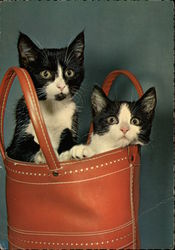 Two Kittens Peek Out from a Leather Bag