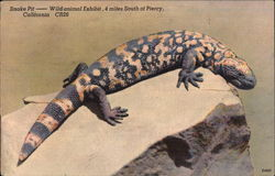 Gila Monster at Snake Pit - Wild Animal Exhibit