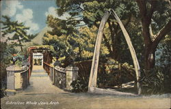 Whale Jaw's Arch Postcard