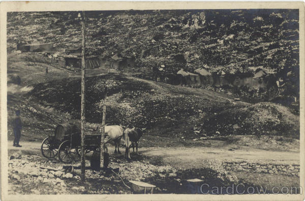 Horses, Wagon - Mining Camp? Cows & Cattle