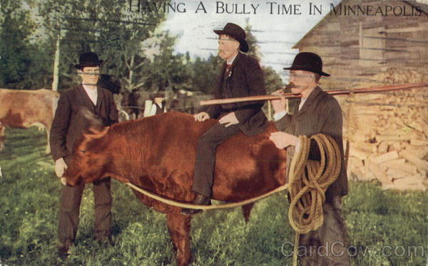 Having A Bully Time In Minneapolis Cows & Cattle