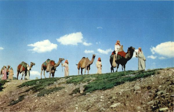 Black Hills Passion Play Camels